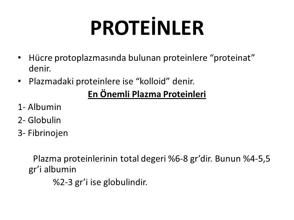 En Önemli Plazma Proteinleri