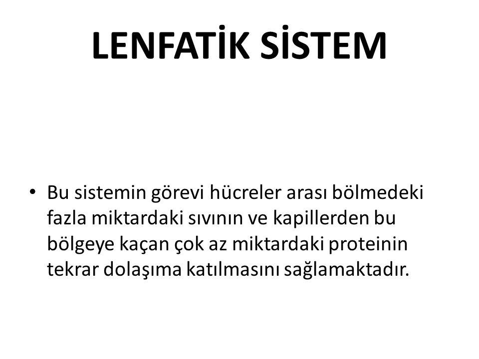 LENFATİK SİSTEM