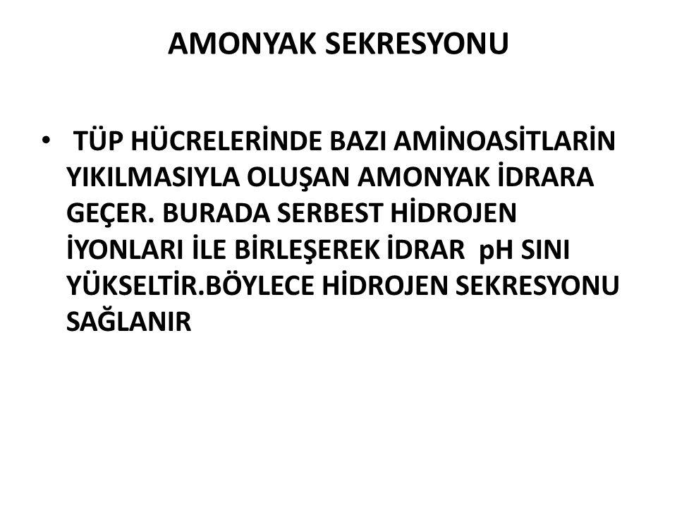 AMONYAK SEKRESYONU