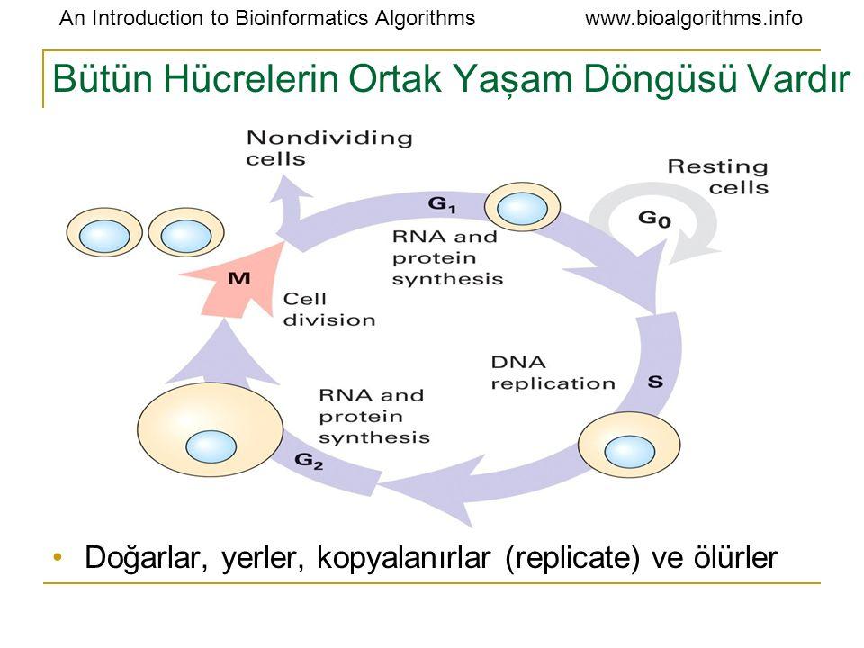 Bütün Hücrelerin Ortak Yaşam Döngüsü Vardır