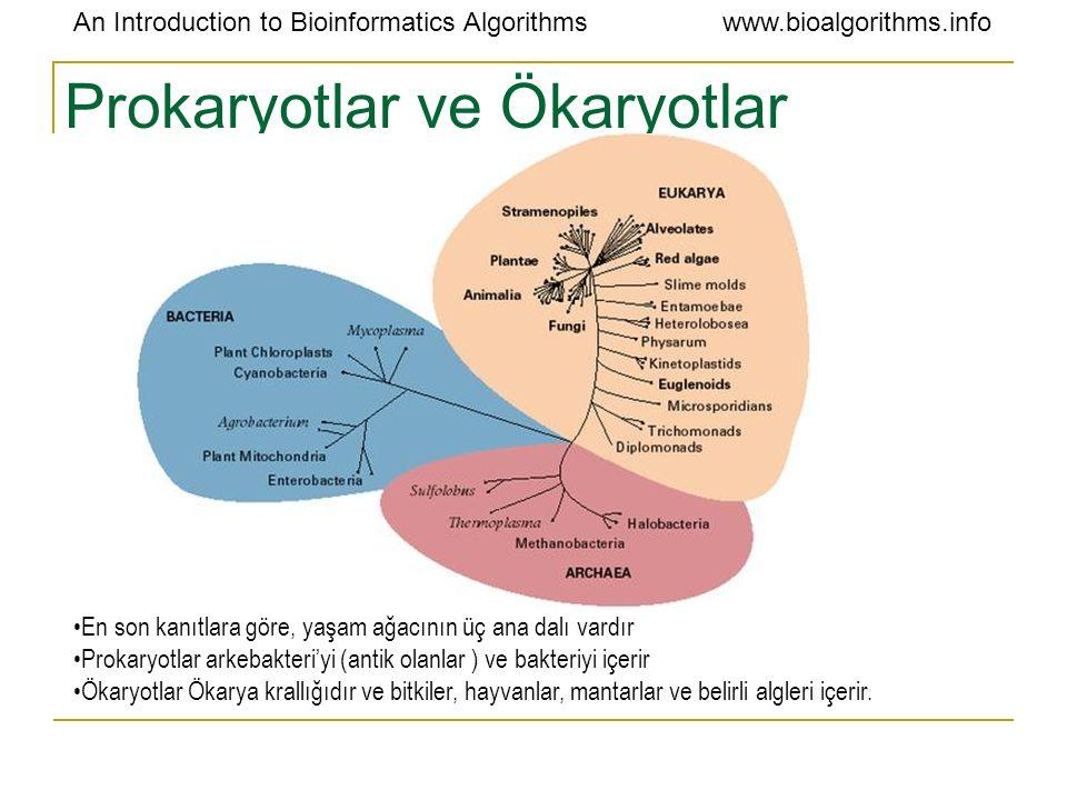 Prokaryotlar ve Ökaryotlar