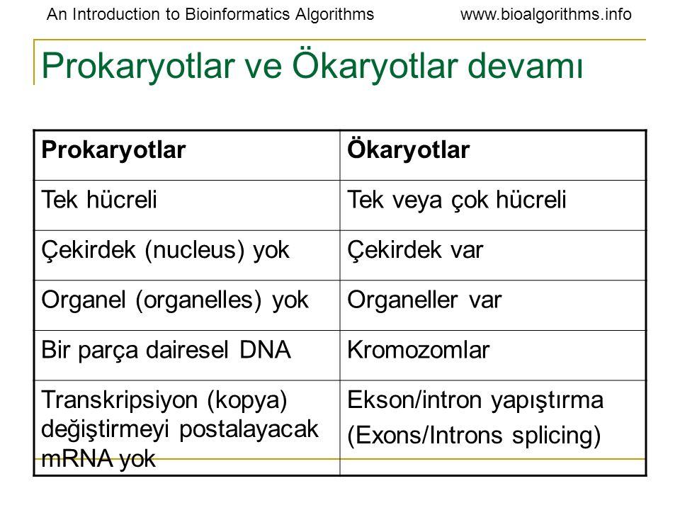 Prokaryotlar ve Ökaryotlar devamı