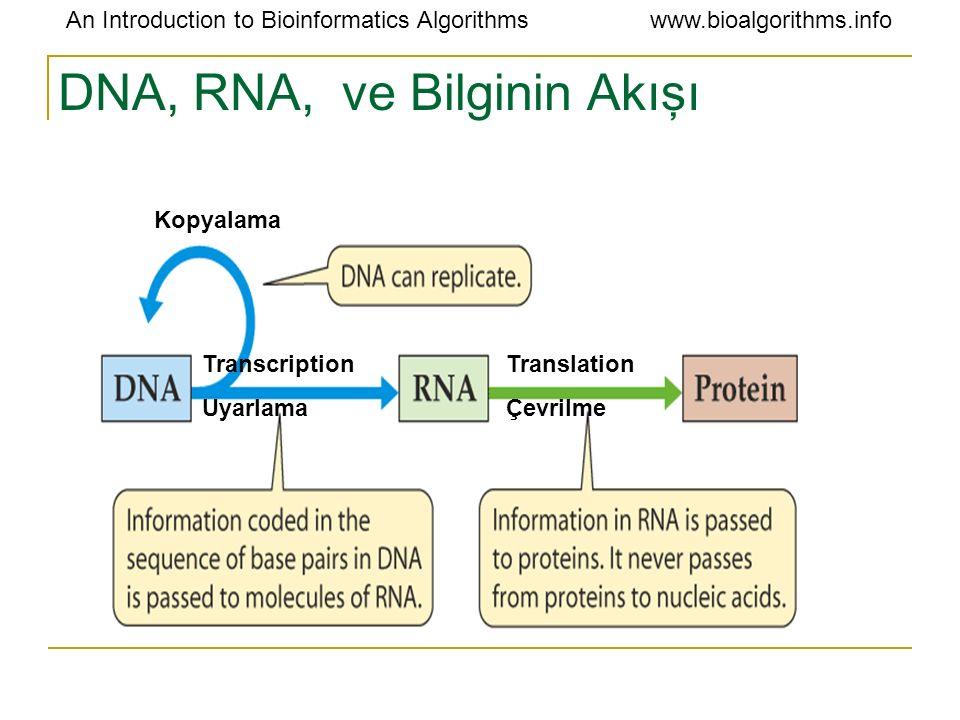 DNA, RNA, ve Bilginin Akışı