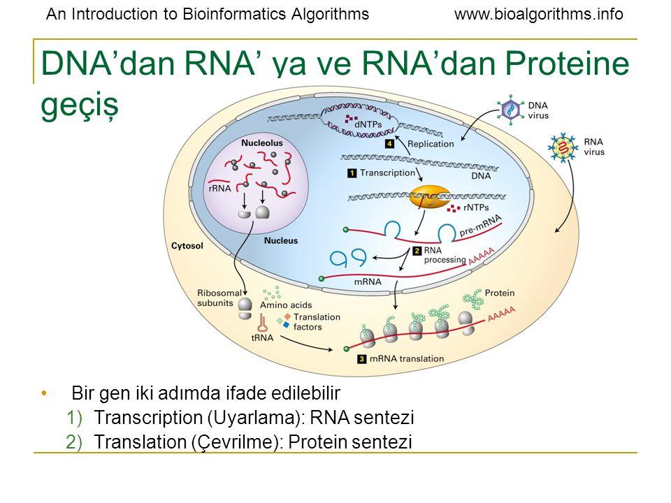 DNA'dan RNA' ya ve RNA'dan Proteine geçiş