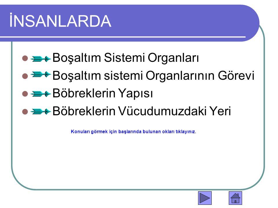 İNSANLARDA Boşaltım Sistemi Organları