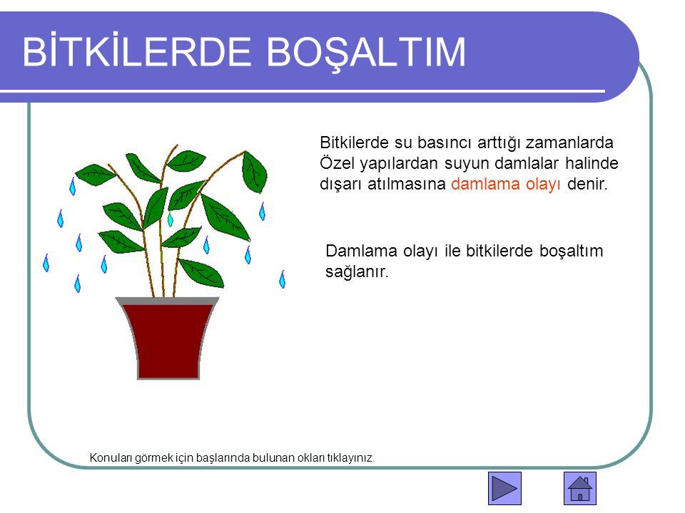 BİTKİLERDE BOŞALTIM Bitkilerde su basıncı arttığı zamanlarda