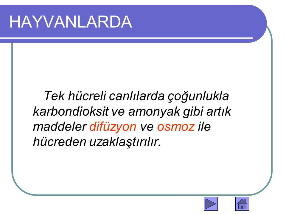 HAYVANLARDA Tek hücreli canlılarda çoğunlukla karbondioksit ve amonyak gibi artık maddeler difüzyon ve osmoz ile hücreden uzaklaştırılır.