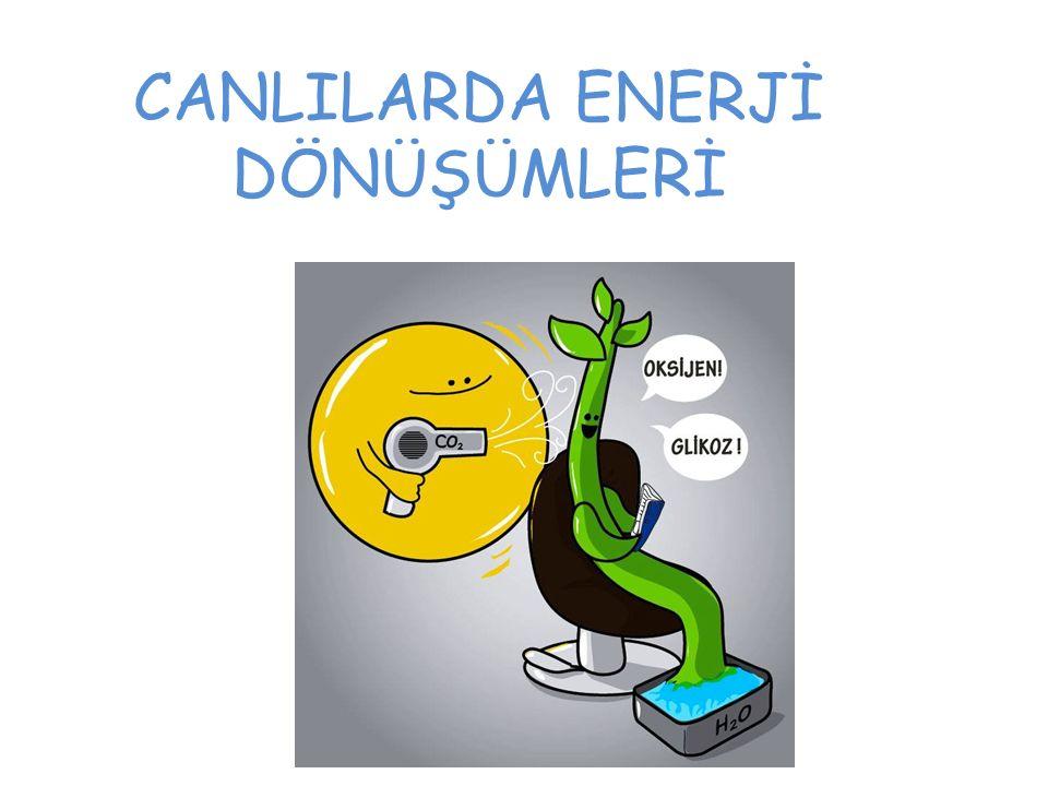CANLILARDA ENERJİ DÖNÜŞÜMLERİ