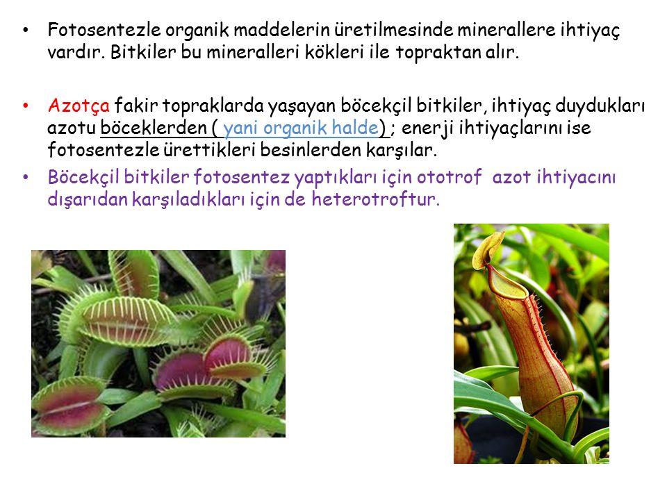 Fotosentezle organik maddelerin üretilmesinde minerallere ihtiyaç vardır. Bitkiler bu mineralleri kökleri ile topraktan alır.