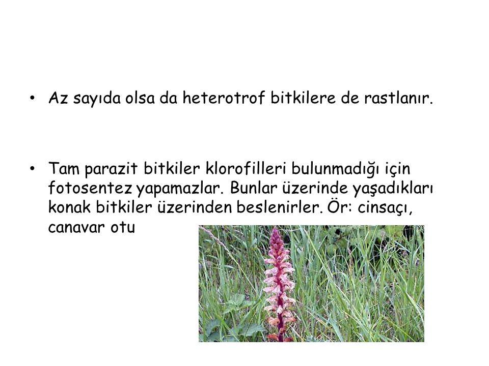 Az sayıda olsa da heterotrof bitkilere de rastlanır.
