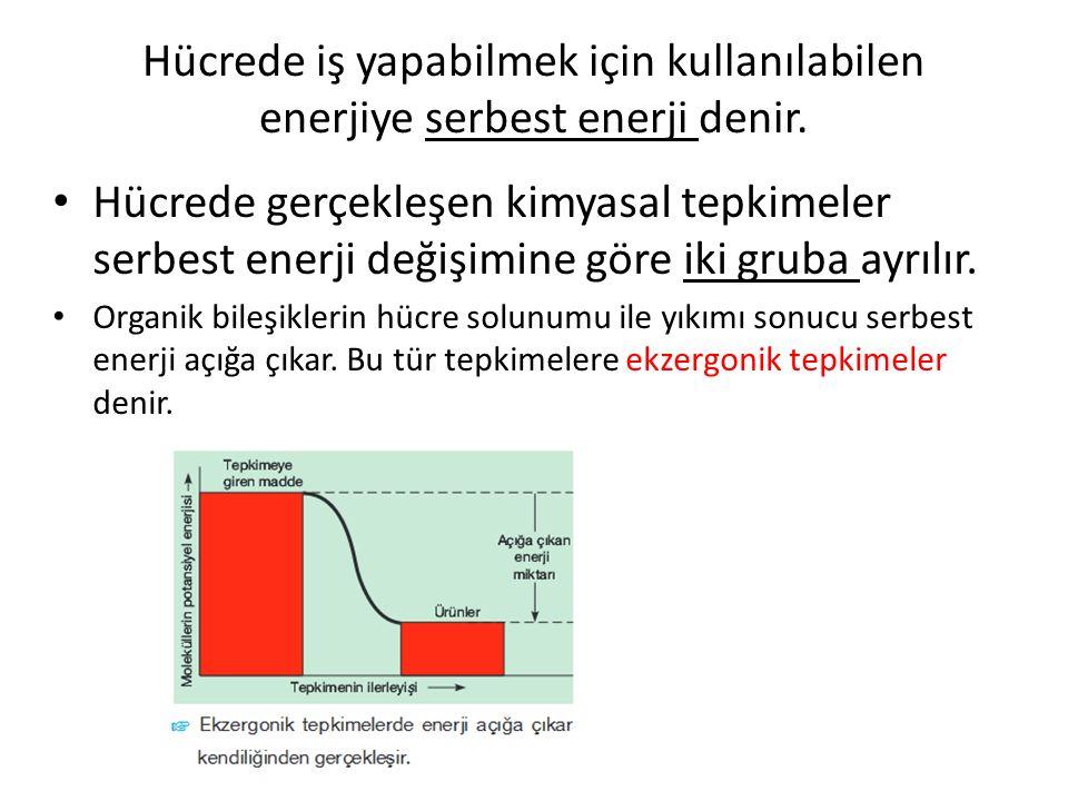 Hücrede iş yapabilmek için kullanılabilen enerjiye serbest enerji denir.