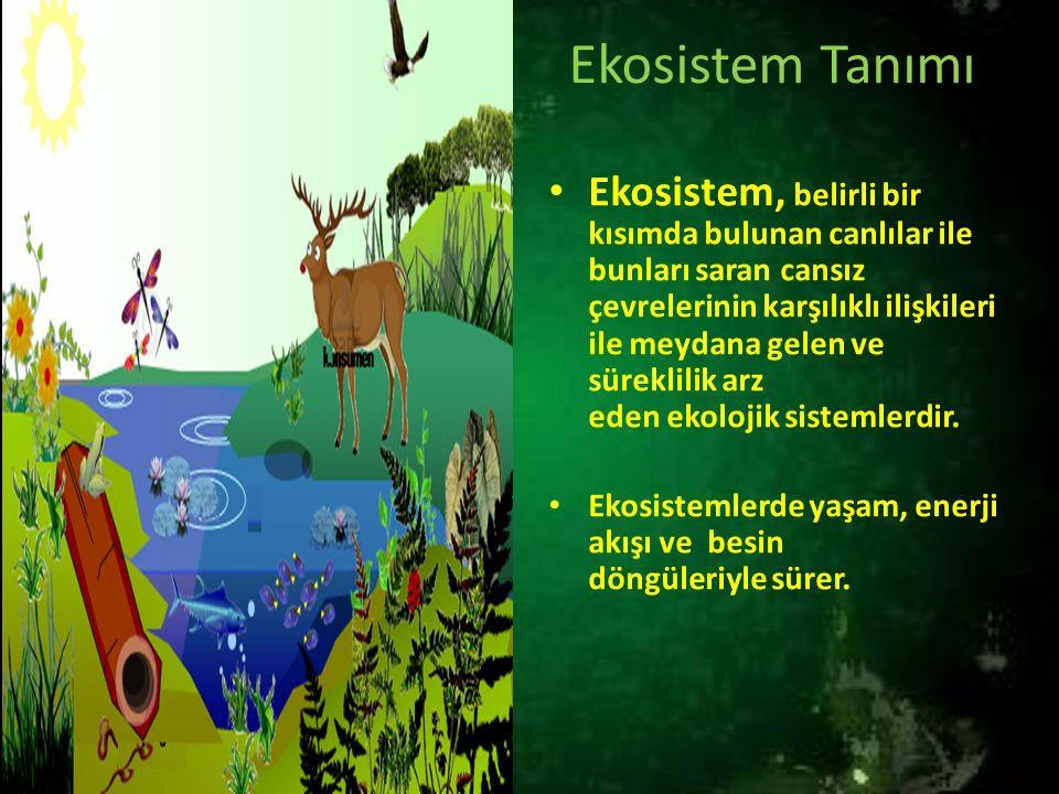 Ekosistem Tanımı