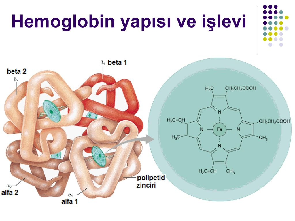 an overview of the importance of hemoglobin in carrying oxygene