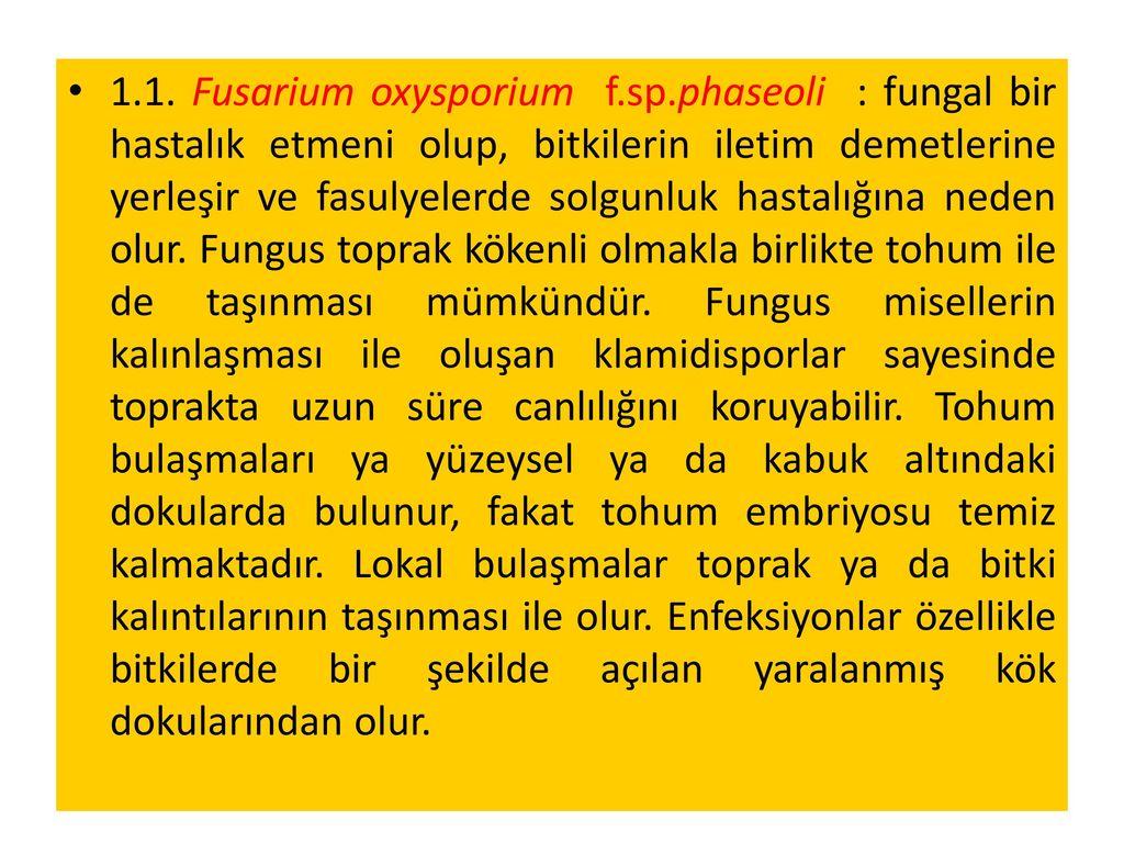 1. 1. Fusarium oxysporium f. sp
