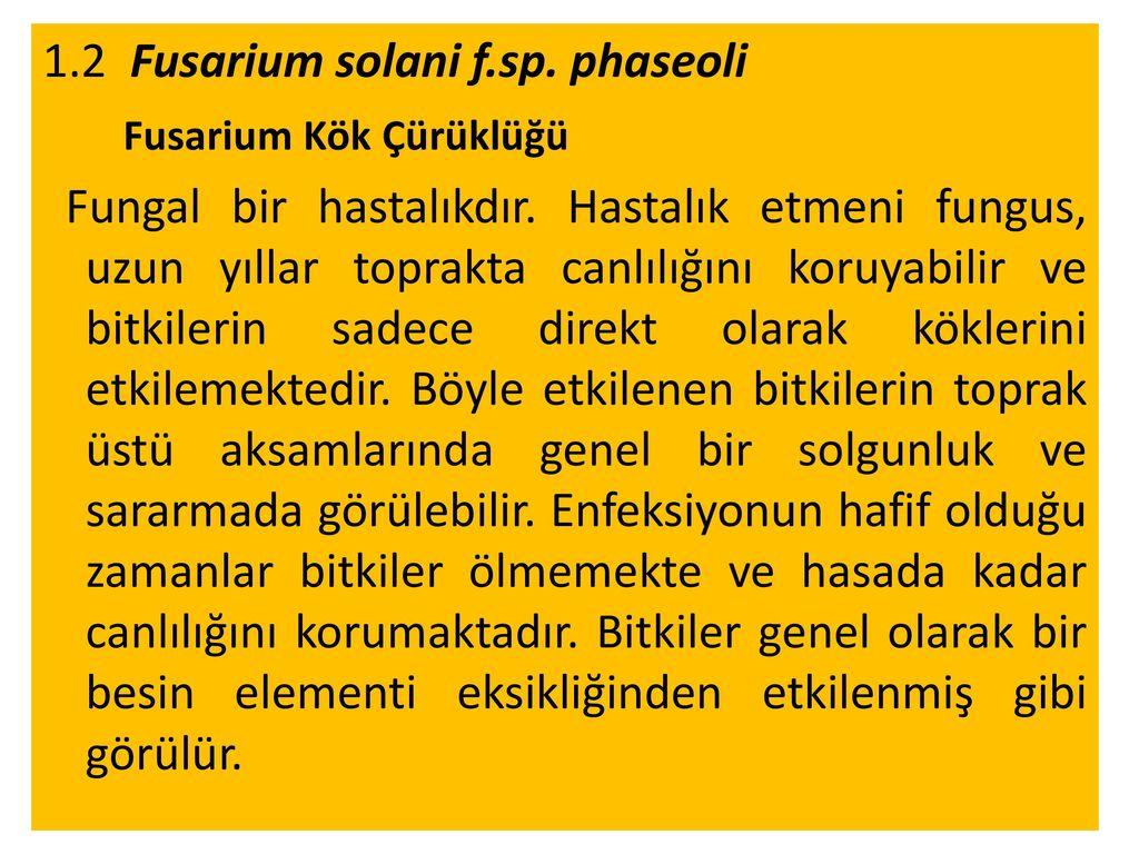 1.2 Fusarium solani f.sp. phaseoli Fusarium Kök Çürüklüğü Fungal bir hastalıkdır.