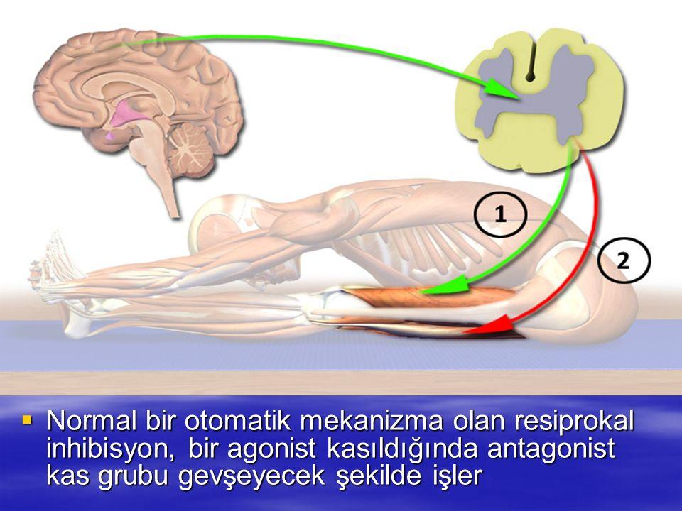 Normal bir otomatik mekanizma olan resiprokal inhibisyon, bir agonist kasıldığında antagonist kas grubu gevşeyecek şekilde işler