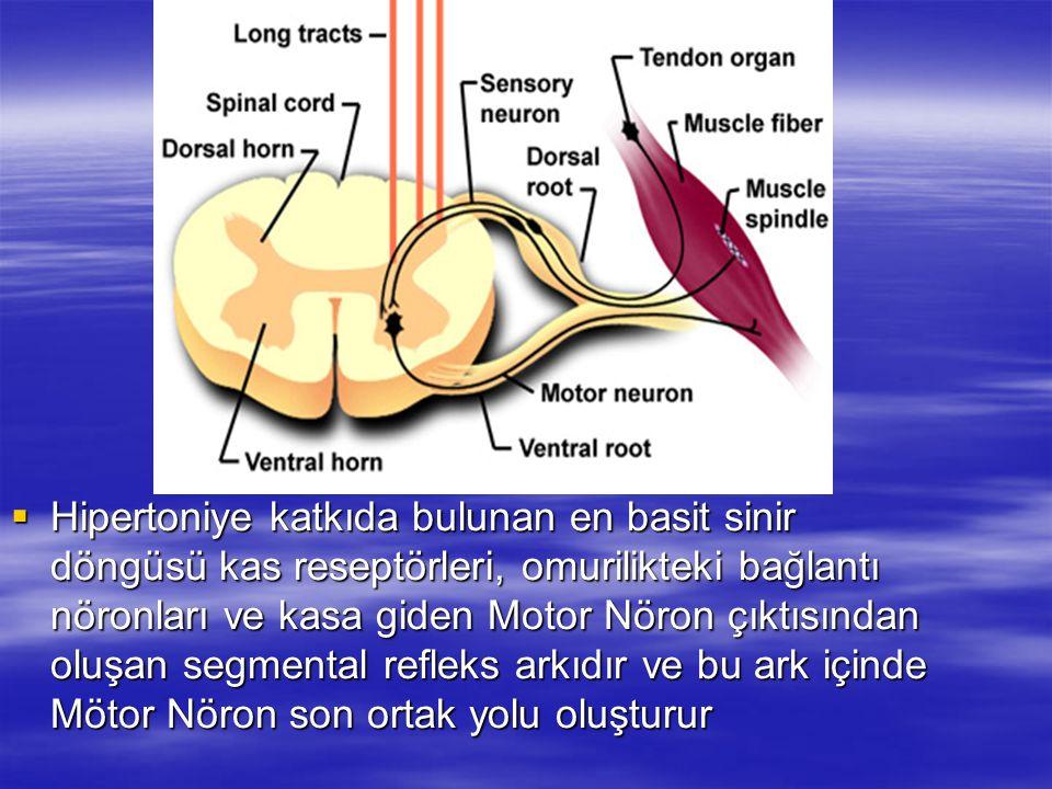 Hipertoniye katkıda bulunan en basit sinir döngüsü kas reseptörleri, omurilikteki bağlantı nöronları ve kasa giden Motor Nöron çıktısından oluşan segmental refleks arkıdır ve bu ark içinde Mötor Nöron son ortak yolu oluşturur