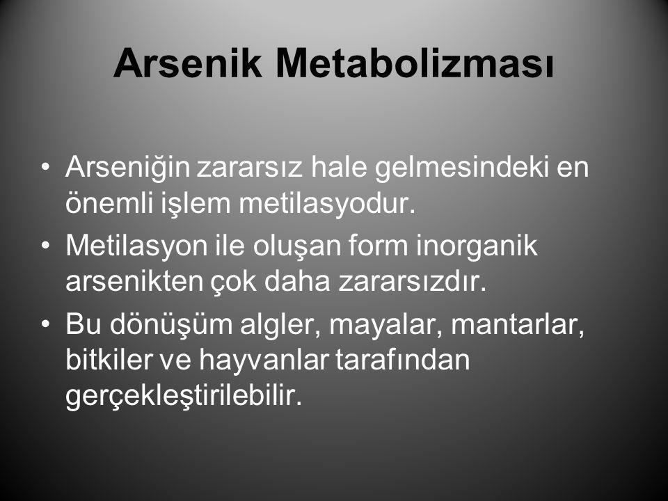 Arsenik Metabolizması