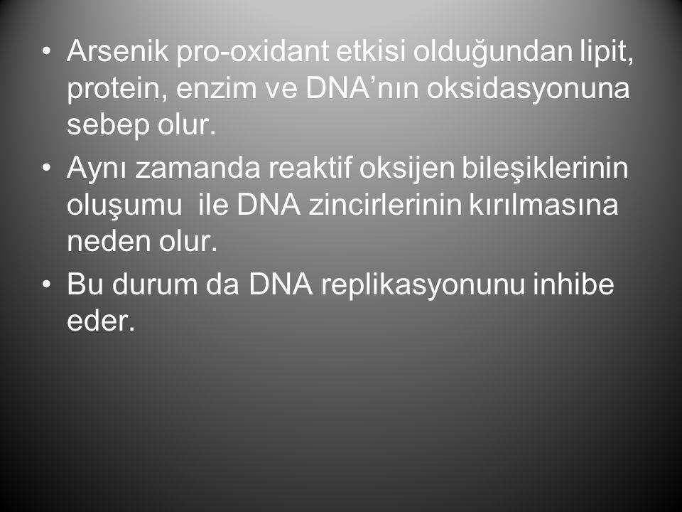 Arsenik pro-oxidant etkisi olduğundan lipit, protein, enzim ve DNA'nın oksidasyonuna sebep olur.