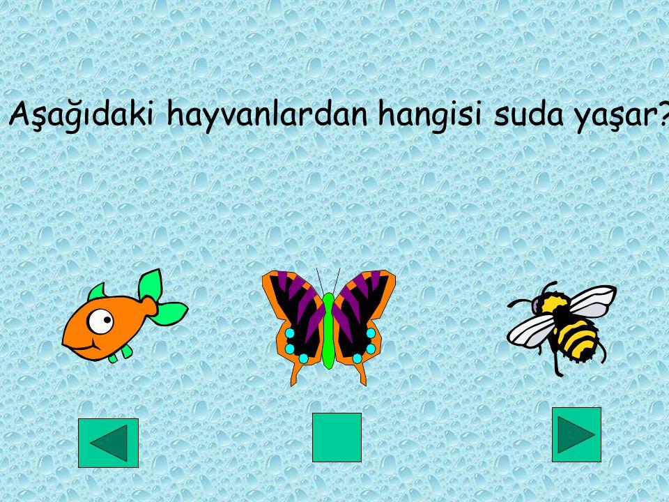 Aşağıdaki hayvanlardan hangisi suda yaşar
