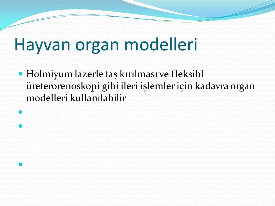 Hayvan organ modelleri