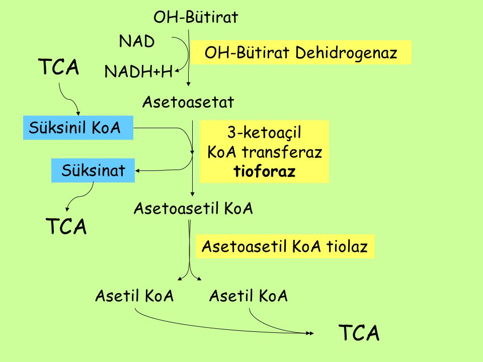 OH-Bütirat Dehidrogenaz