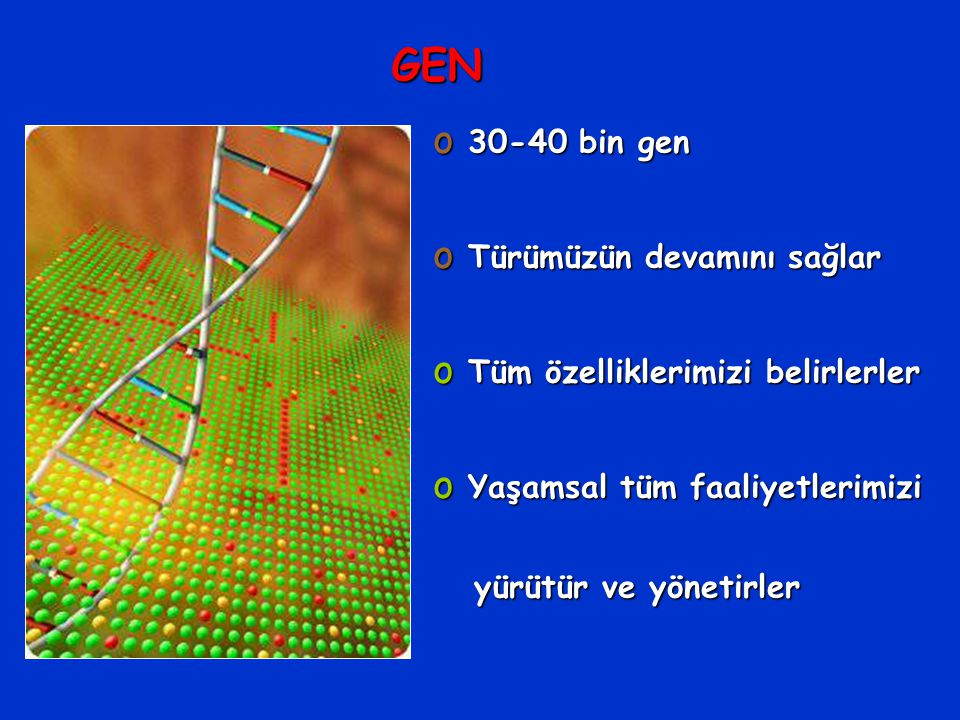 GEN 30-40 bin gen Türümüzün devamını sağlar