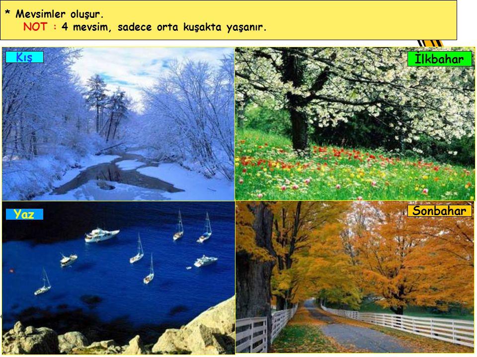 Kış İlkbahar Sonbahar Yaz