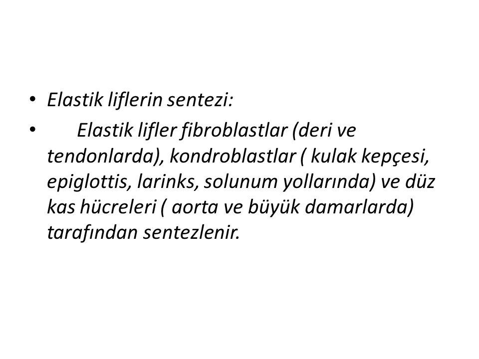 Elastik liflerin sentezi: