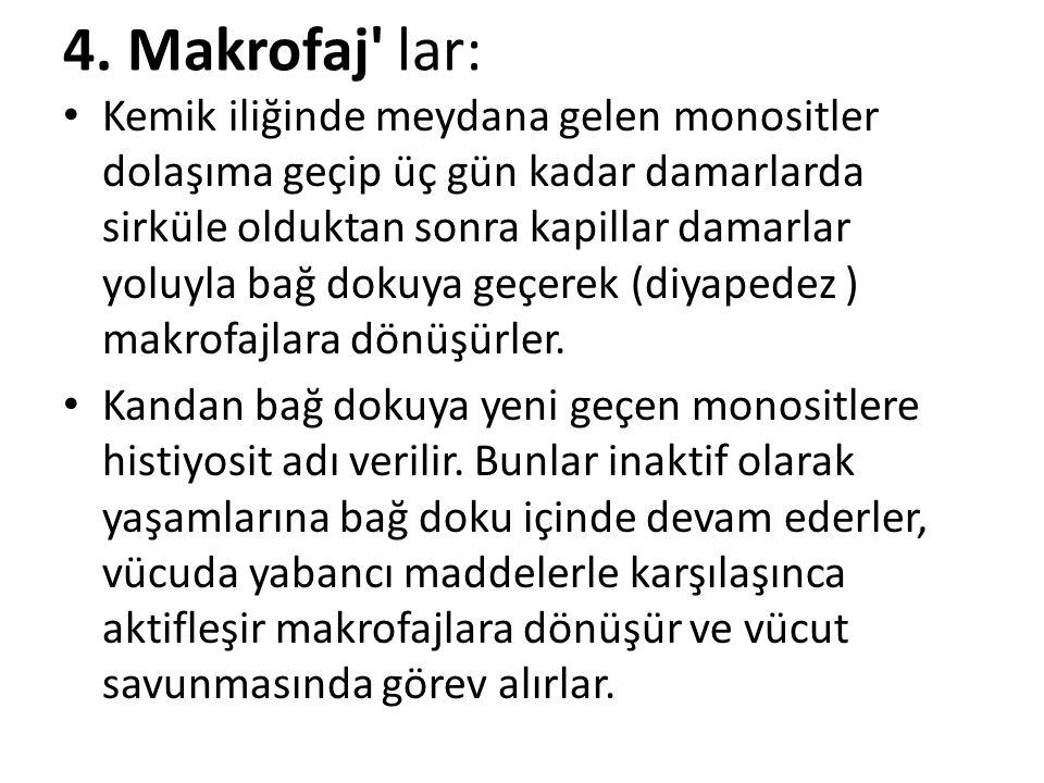 4. Makrofaj lar: