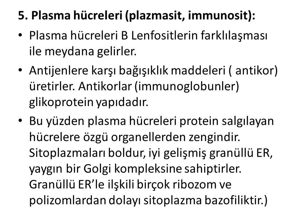 5. Plasma hücreleri (plazmasit, immunosit):