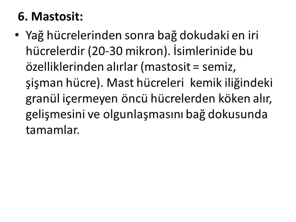 6. Mastosit: