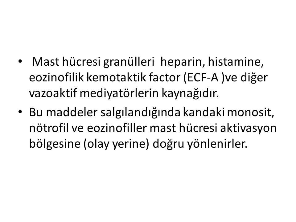 Mast hücresi granülleri heparin, histamine, eozinofilik kemotaktik factor (ECF-A )ve diğer vazoaktif mediyatörlerin kaynağıdır.