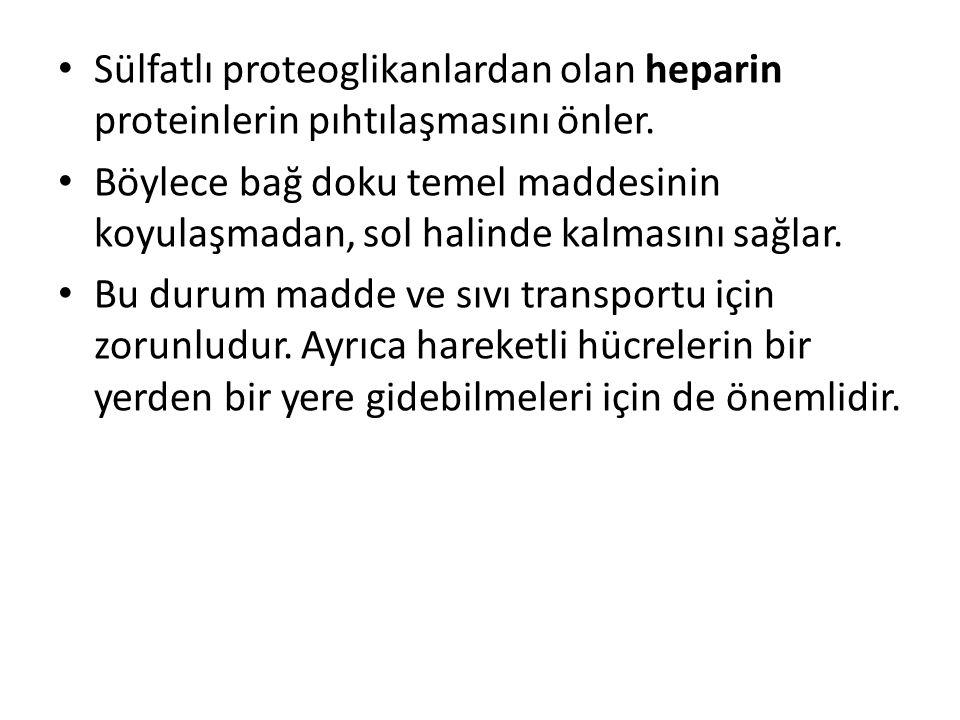 Sülfatlı proteoglikanlardan olan heparin proteinlerin pıhtılaşmasını önler.