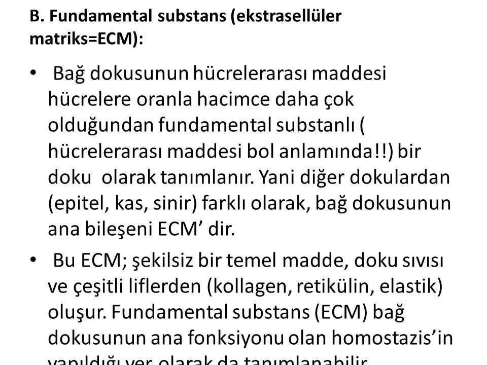 B. Fundamental substans (ekstrasellüler matriks=ECM):