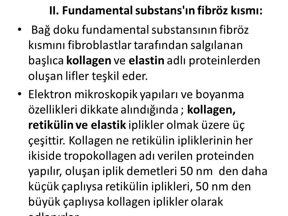 II. Fundamental substans ın fibröz kısmı: