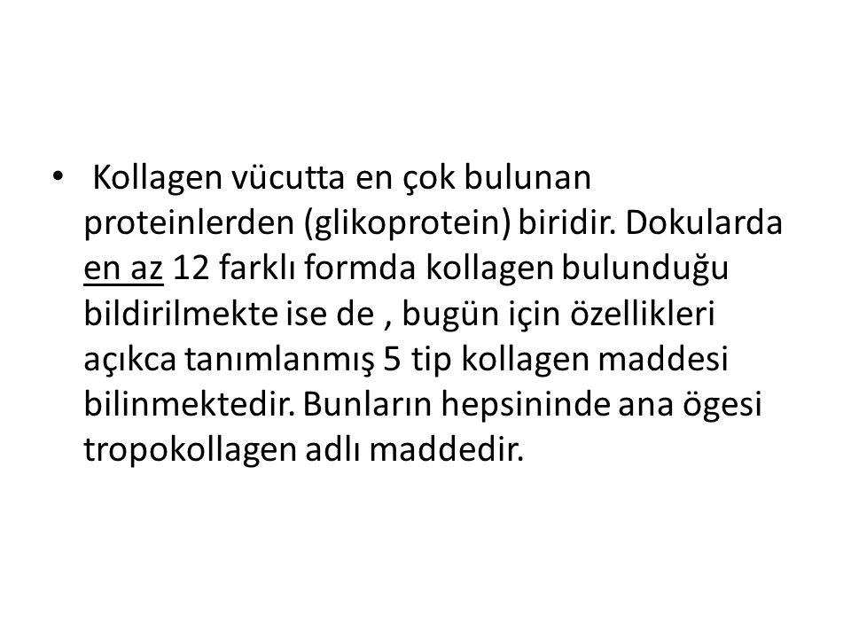 Kollagen vücutta en çok bulunan proteinlerden (glikoprotein) biridir
