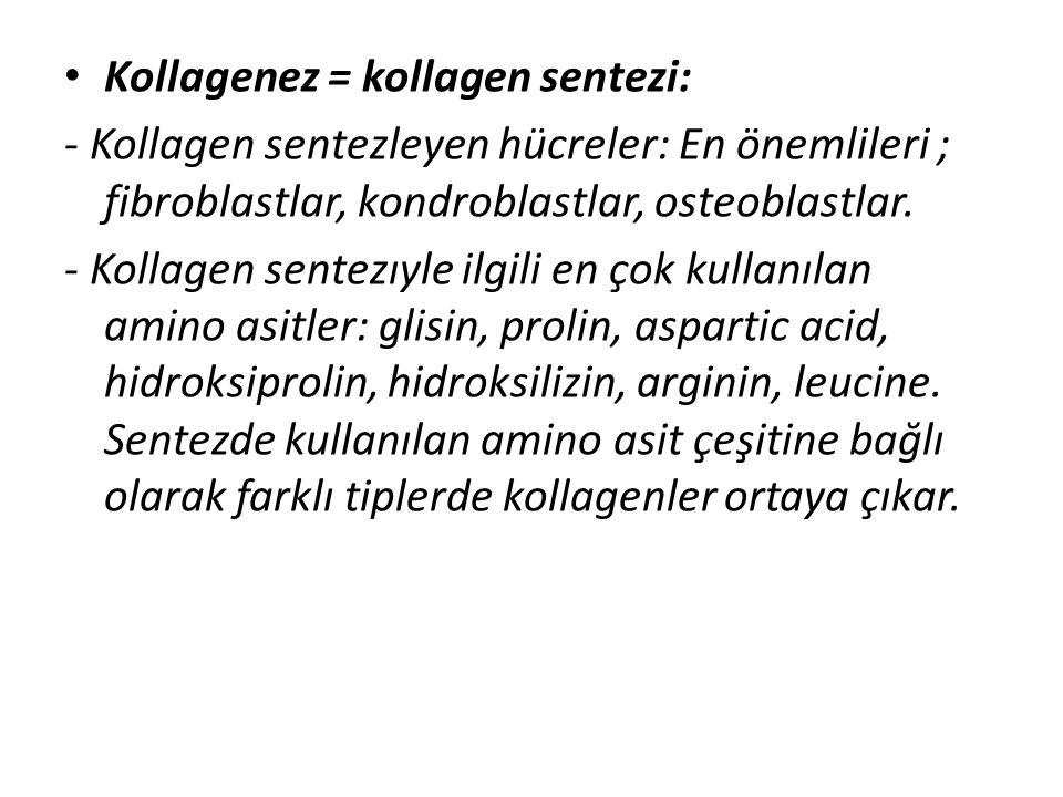Kollagenez = kollagen sentezi: