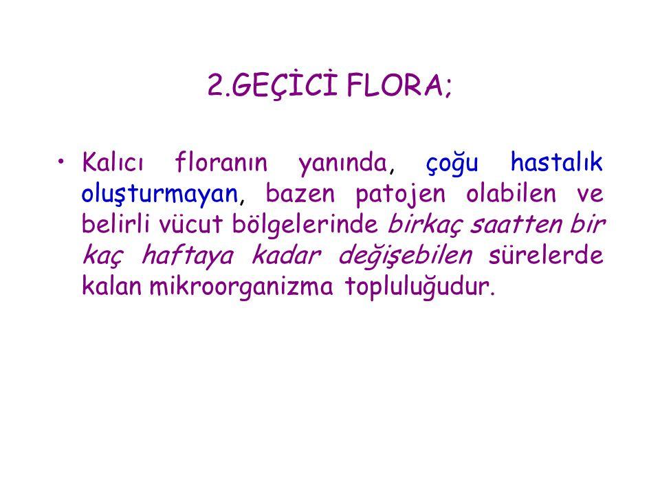 2.GEÇİCİ FLORA;