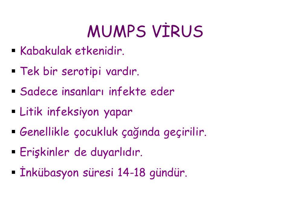 MUMPS VİRUS Kabakulak etkenidir. Tek bir serotipi vardır.