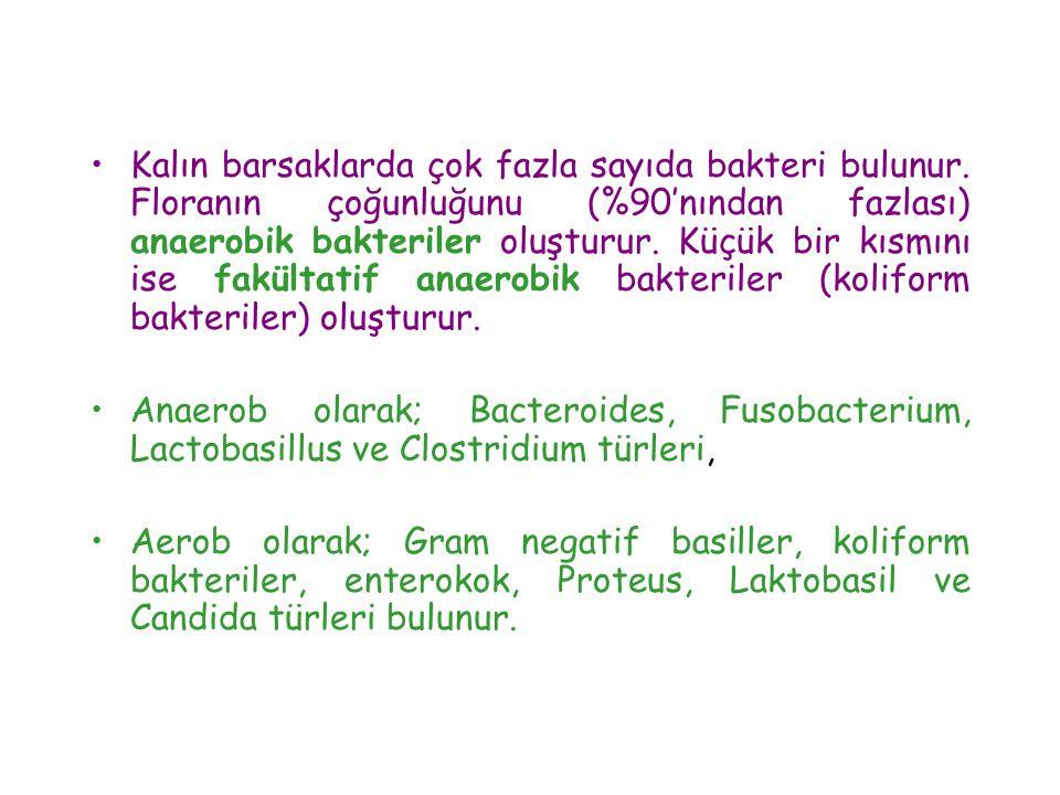 Kalın barsaklarda çok fazla sayıda bakteri bulunur