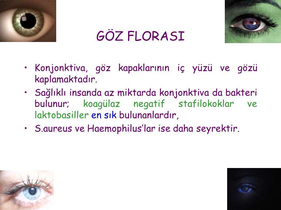 GÖZ FLORASI Konjonktiva, göz kapaklarının iç yüzü ve gözü kaplamaktadır.