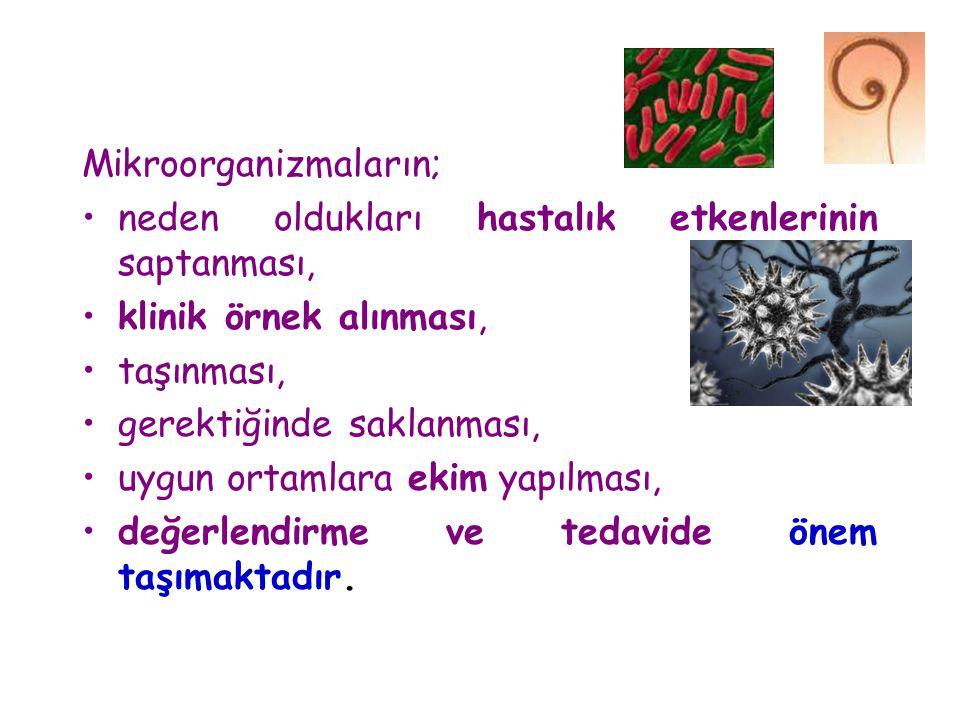 Mikroorganizmaların;