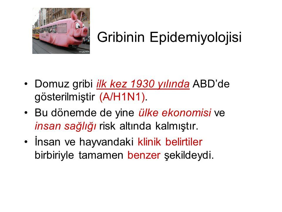 Gribinin Epidemiyolojisi