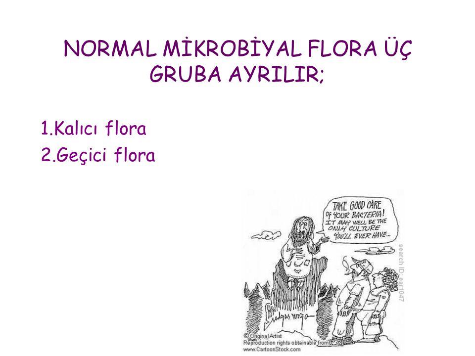 NORMAL MİKROBİYAL FLORA ÜÇ GRUBA AYRILIR;