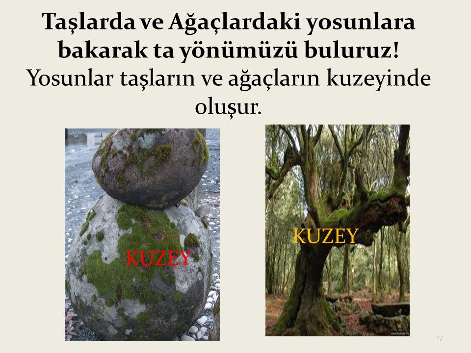 Taşlarda ve Ağaçlardaki yosunlara bakarak ta yönümüzü buluruz