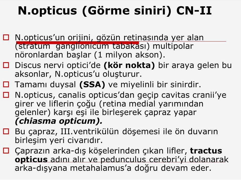 N.opticus (Görme siniri) CN-II