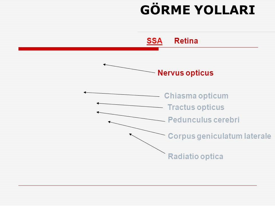 GÖRME YOLLARI SSA Retina Nervus opticus Chiasma opticum