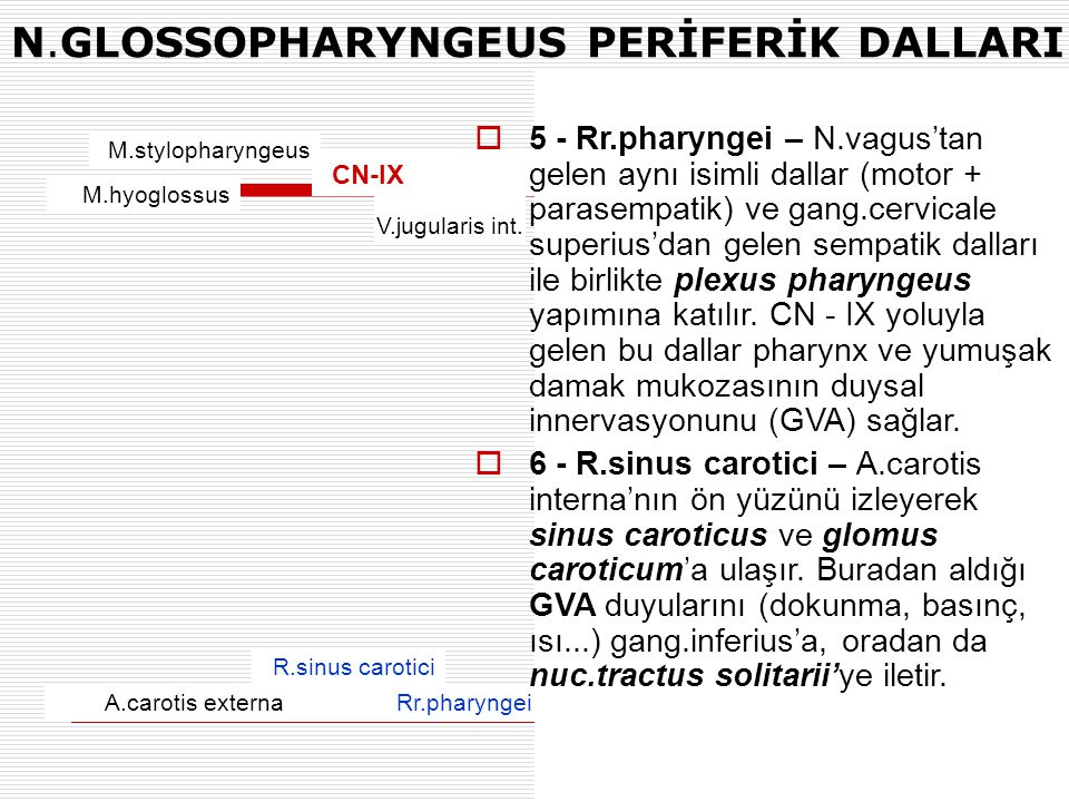 N.GLOSSOPHARYNGEUS PERİFERİK DALLARI