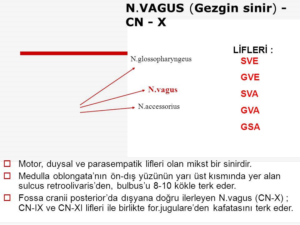 N.VAGUS (Gezgin sinir) - CN - X